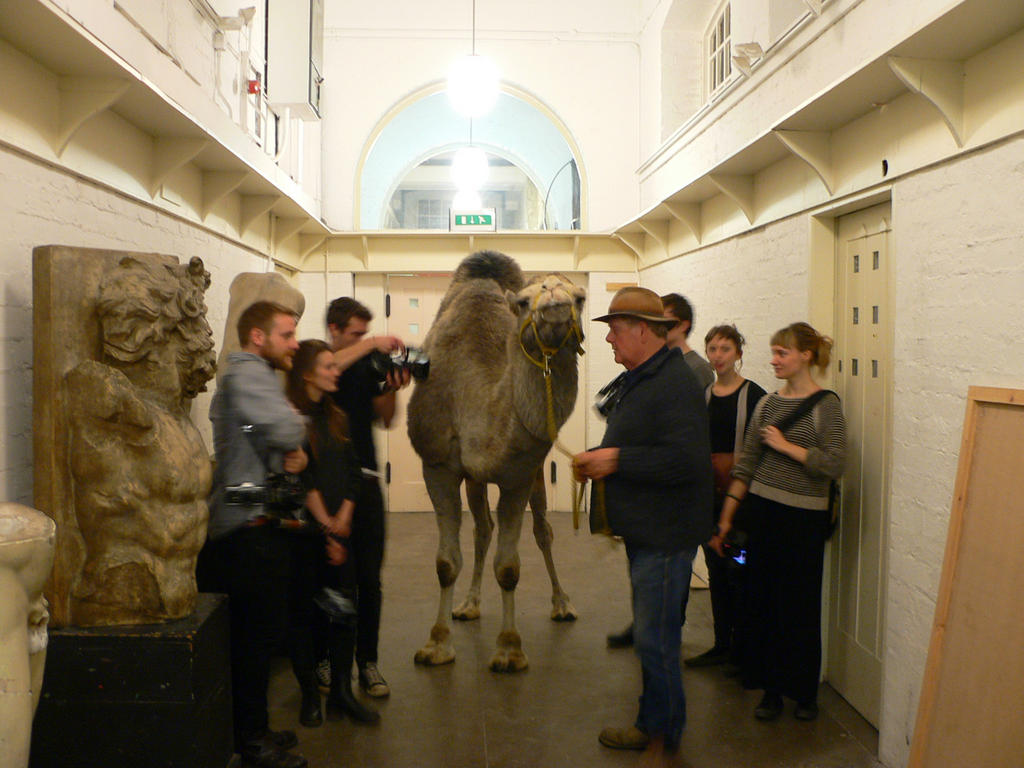 Camel in the basement of the Mackintosh Building